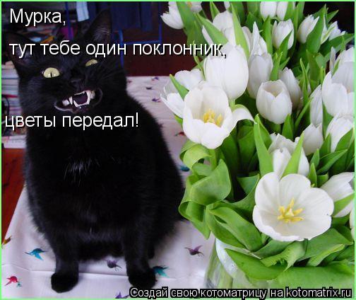 Котоматрица: Мурка,  тут тебе один поклонник, цветы передал!