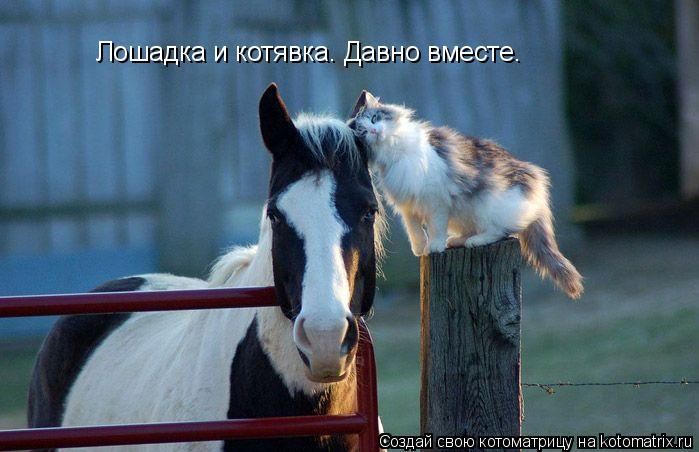 Котоматрица: Лошадка и котявка. Давно вместе.