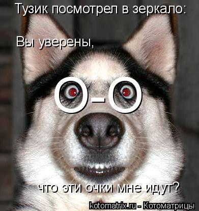 Котоматрица: Тузик посмотрел в зеркало: Вы уверены, что эти очки мне идут? О-О