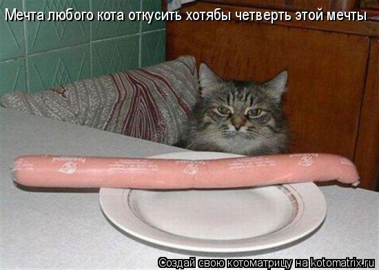 Котоматрица: Мечта любого кота откусить хотябы четверть этой мечты
