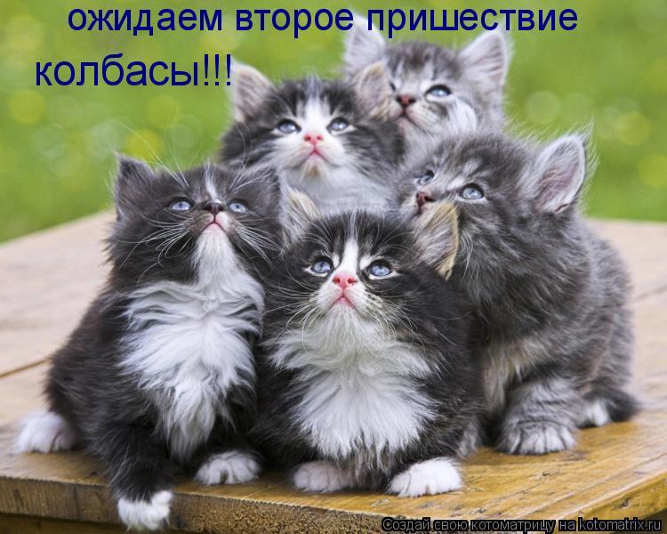 Котоматрица: ожидаем второе пришествие колбасы!!!