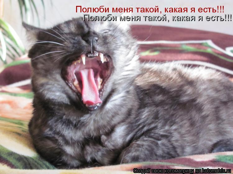 Котоматрица: Полюби меня такой, какая я есть!!! Полюби меня такой, какая я есть!!!