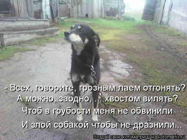 Котоматрица: - Всех, говорите, грозным лаем отгонять? А можно, заодно, ... хвостом вилять? Чтоб в грубости меня не обвинили И злой собакой чтобы не дразнили..