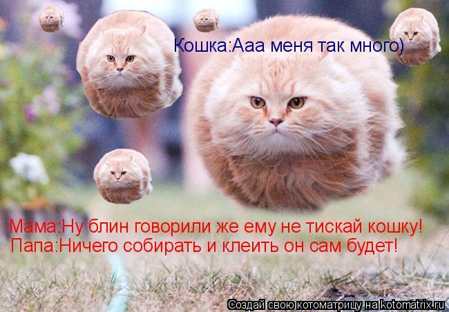 Котоматрица: Мама:Ну блин говорили же ему не тискай кошку! Папа:Ничего собирать и клеить он сам будет! Кошка:Ааа меня так много)