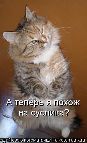 Котоматрица: А теперь я похож на суслика?