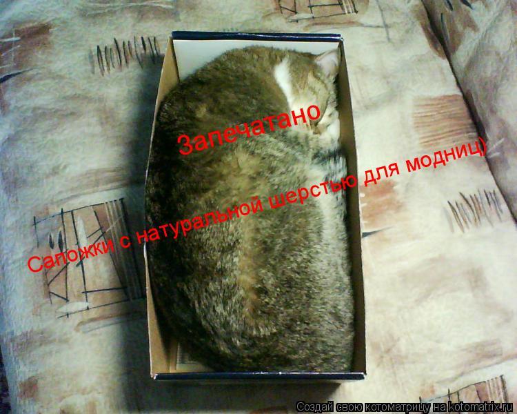 Котоматрица: Сапожки с натуральной шерстью для модниц) Запечатано