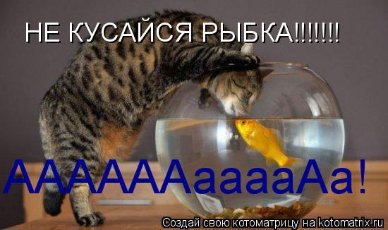 Котоматрица: НЕ КУСАЙСЯ РЫБКА!!!!!!! ААААААааааАа!