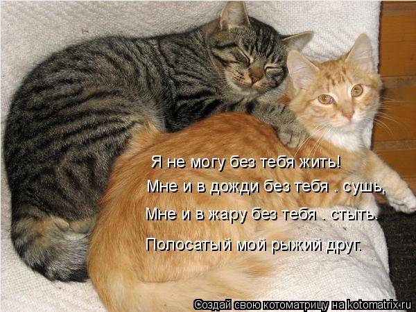 Котоматрица: Я не могу без тебя жить!    Мне и в дожди без тебя – сушь,   Мне и в жару без тебя – стыть. Полосатый мой рыжий друг.