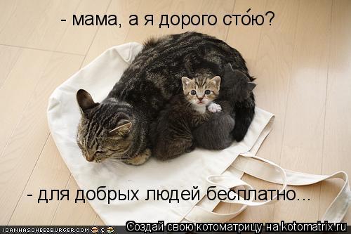 Котоматрица: - мама, а я дорого стою?  -  - для добрых людей бесплатно...