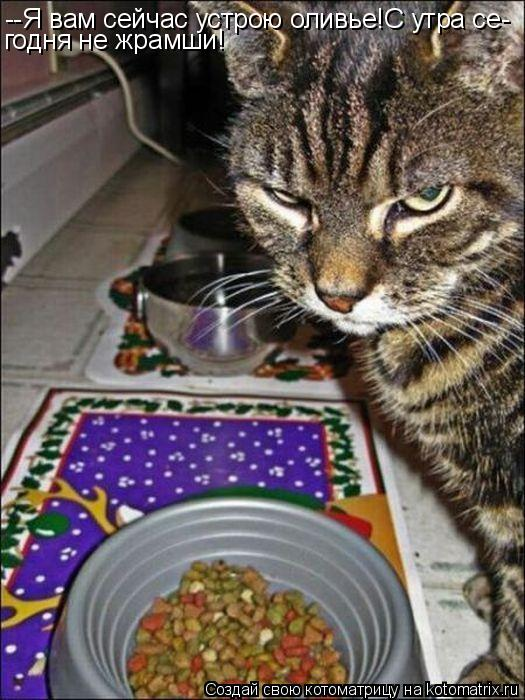 Котоматрица: --Я вам сейчас устрою оливье!С утра се- годня не жрамши!