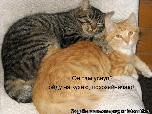 Котоматрица: - Он там уснул? Пойду на кухню, похозяйничаю!