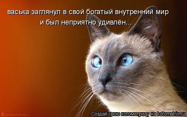 Котоматрица: васька заглянул в свой богатый внутренний мир и был неприятно удивлён...