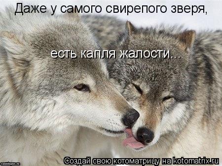 Котоматрица: Даже у самого свирепого зверя,  есть капля жалости...