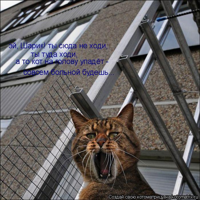 Котоматрица: эй, Шарик! ты сюда не ходи,  ты туда ходи,    а то кот на голову упадёт - совсем больной будешь...