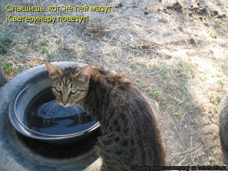 Котоматрица: Слышишь, кот, не пей мазут: К ветеринару повезут!