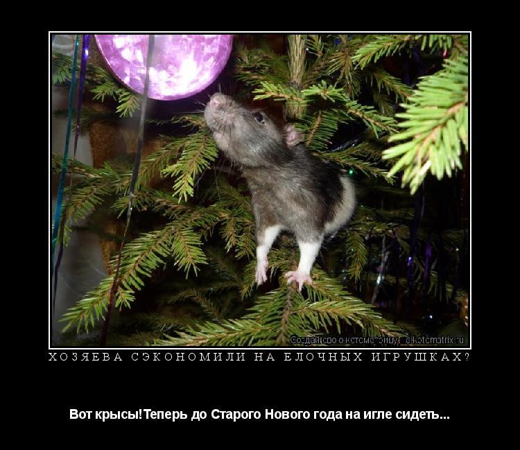 Котоматрица: Хозяева сэкономили на ёлочных игрушках? Вот крысы!Теперь до Старого Нового года на игле сидеть...