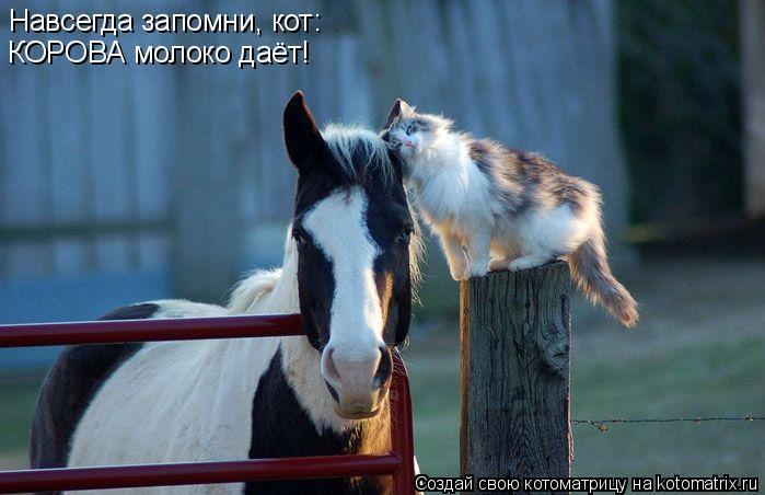 Котоматрица: Навсегда запомни, кот: КОРОВА молоко даёт!