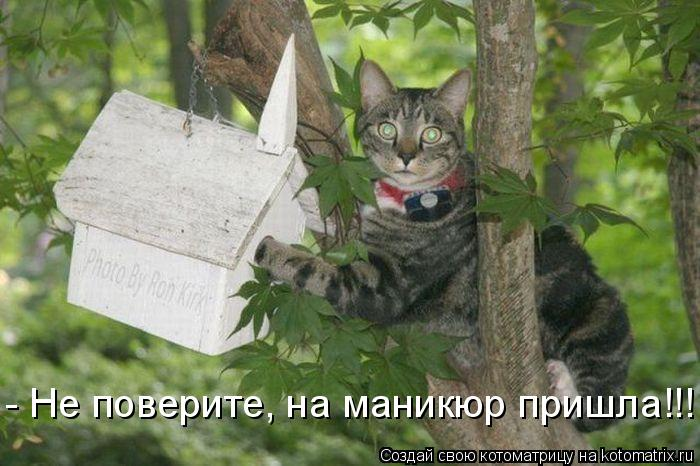 Котоматрица: - Не поверите, на маникюр пришла!!!
