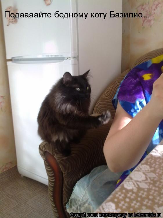 Котоматрица: Подаааайте бедному коту Базилио...