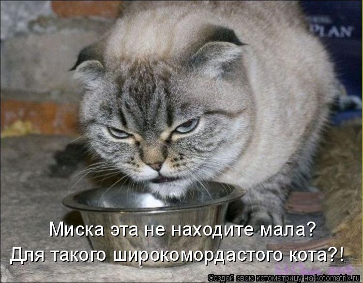 Котоматрица: Миска эта не находите мала? Для такого широкомордастого кота?!