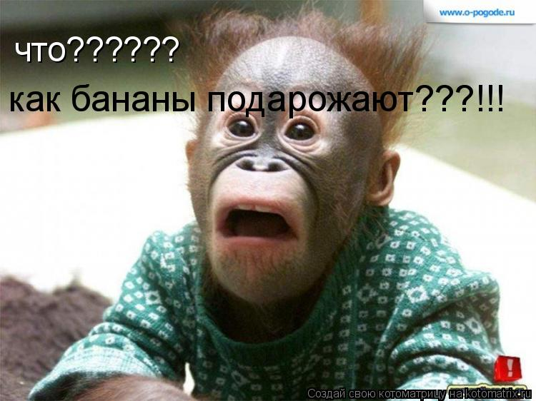 Котоматрица: что?????? как бананы подарожают???!!!