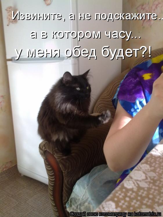 Котоматрица: Извините, а не подскажите.... у меня обед будет?! а в котором часу...