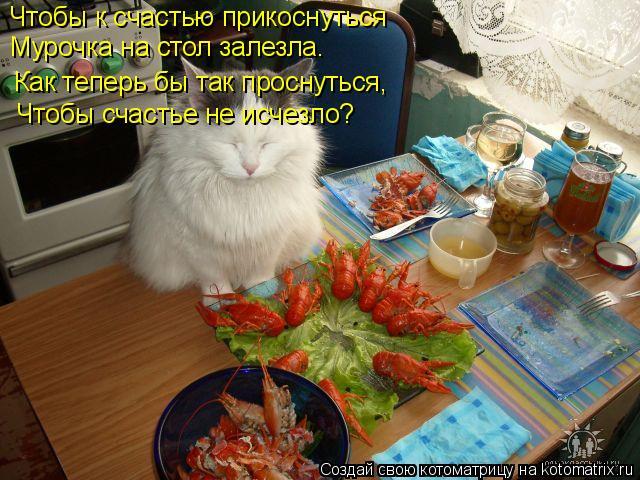 Котоматрица: Чтобы к счастью прикоснуться Мурочка на стол залезла. Как теперь бы так проснуться, Чтобы счастье не исчезло?