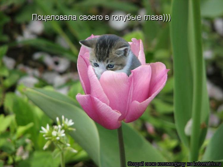 Котоматрица: Поцеловала своего в голубые глаза)))