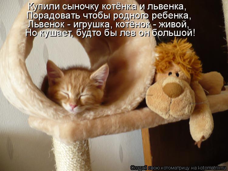 Котоматрица: Купили сыночку котёнка и львенка, Порадовать чтобы родного ребенка, Львенок - игрушка, котёнок - живой, Но кушает, будто бы лев он большой!