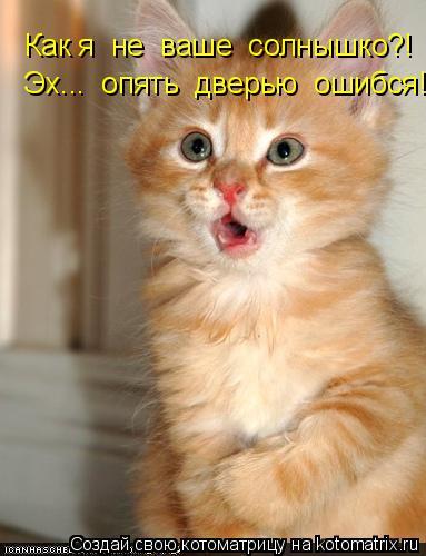 Котоматрица: Как я  не  ваше  солнышко?!   Эх...  опять  дверью  ошибся!!