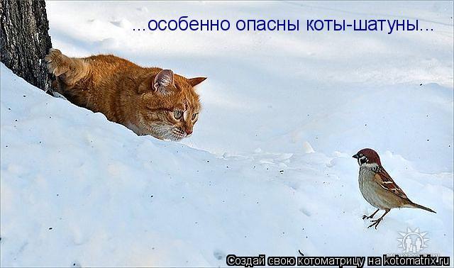 Котоматрица: ...особенно опасны коты-шатуны...