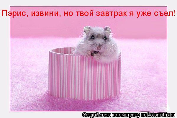 Котоматрица: Пэрис, извини, но твой завтрак я уже съел!