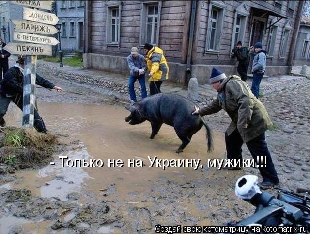 Котоматрица: - Только не на Украину, мужики!!!