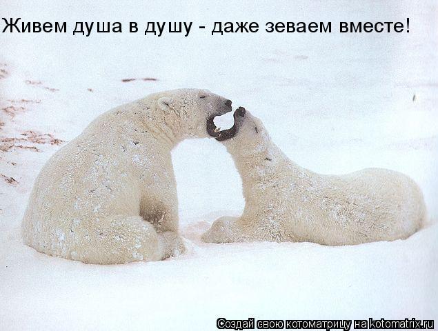 Котоматрица: Живем душа в душу - даже зеваем вместе!