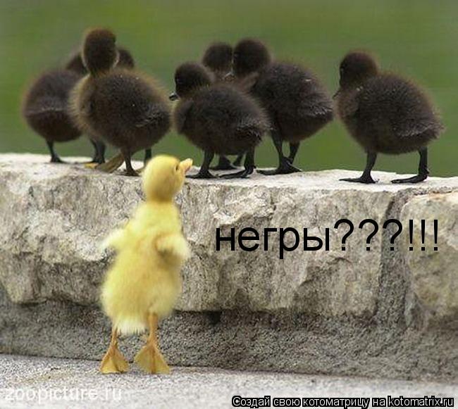 Котоматрица: негры???!!!