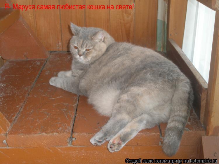 Котоматрица: Я- Маруся,самая любистая кошка на свете!