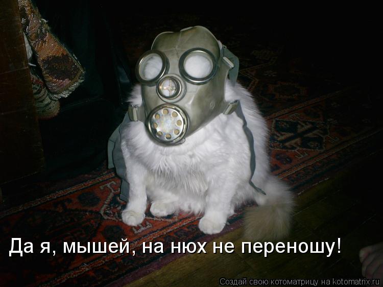 Котоматрица - Да я, мышей, на нюх не переношу!