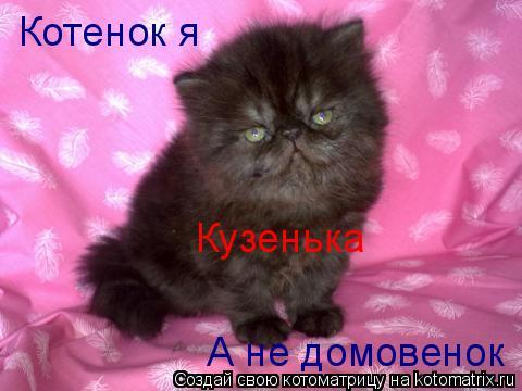 Котоматрица: Котенок я  Кузенька А не домовенок