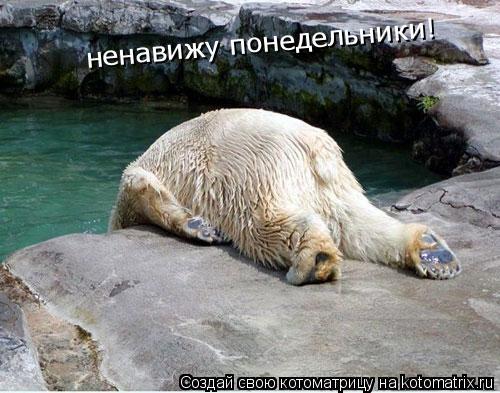 Котоматрица: ненавижу понедельники!