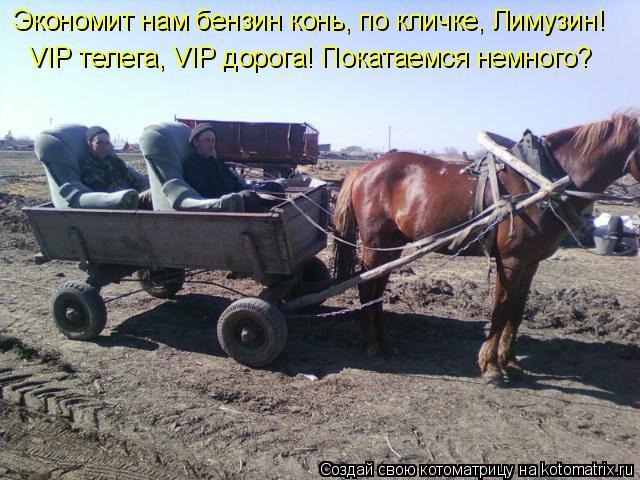 Котоматрица: Экономит нам бензин конь, по кличке, Лимузин!    VIP телега, VIP дорога! Покатаемся немного?