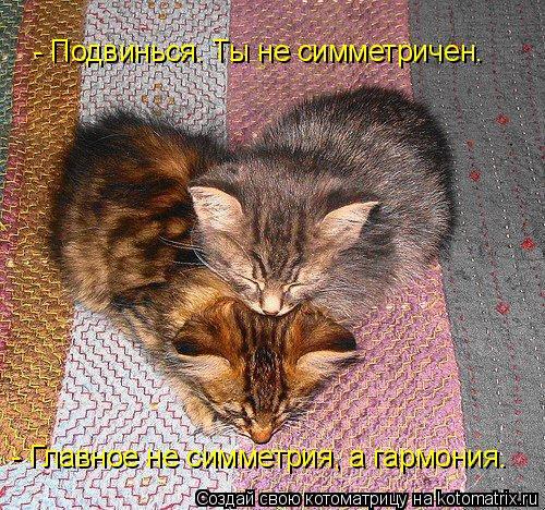 Котоматрица: - Подвинься. Ты не симметричен. - Главное не симметрия, а гармония.