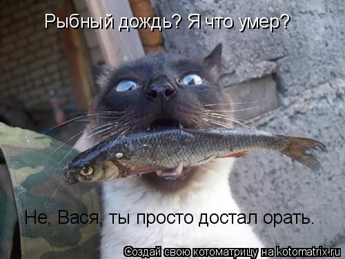 Котоматрица: Рыбный дождь? Я что умер? Не, Вася, ты просто достал орать.