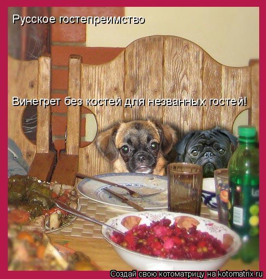 Котоматрица: Винегрет без костей для незванных гостей!    Русское гостепреимство