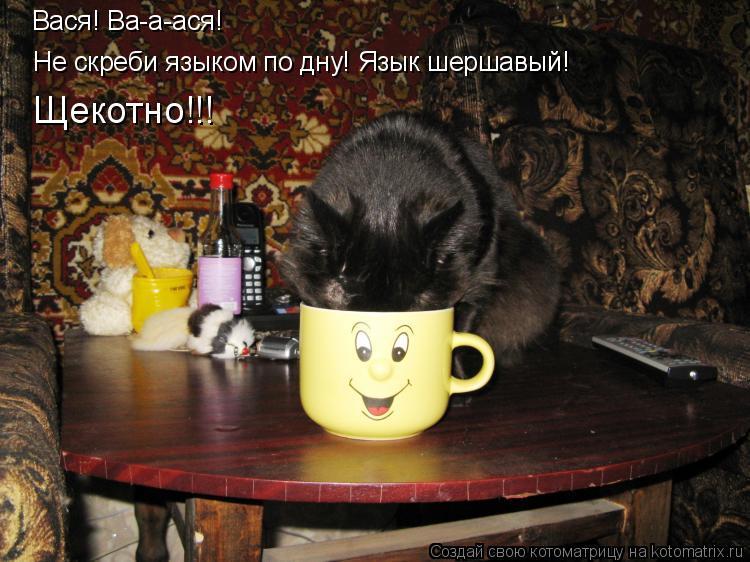 Котоматрица: Вася! Ва-а-ася!  Не скреби языком по дну! Язык шершавый!  Щекотно!!!