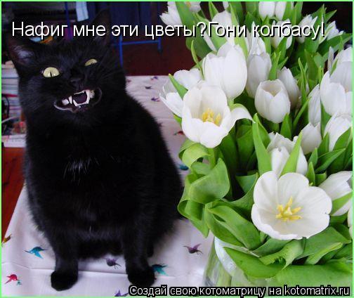 Котоматрица: Нафиг мне эти цветы?Гони колбасу!