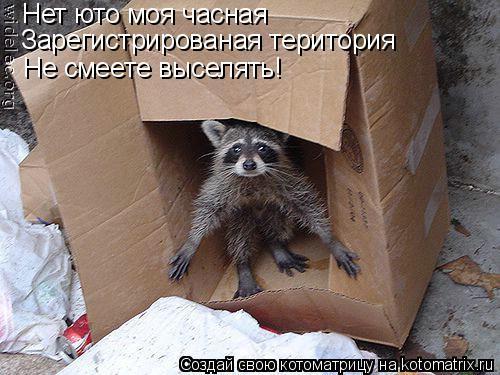 Котоматрица: Нет юто моя часная Зарегистрированая територия Не смеете выселять!