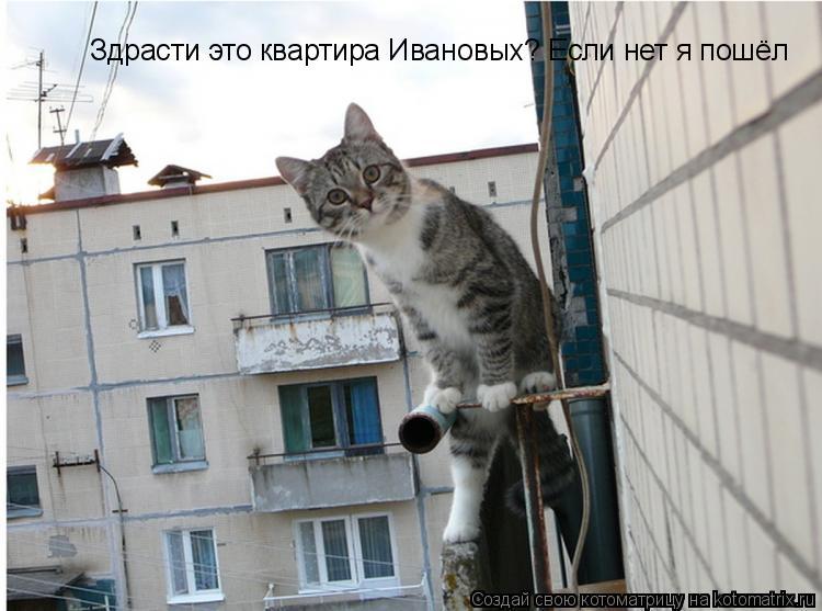 Котоматрица: Здрасти это квартира Ивановых? Если нет я пошёл