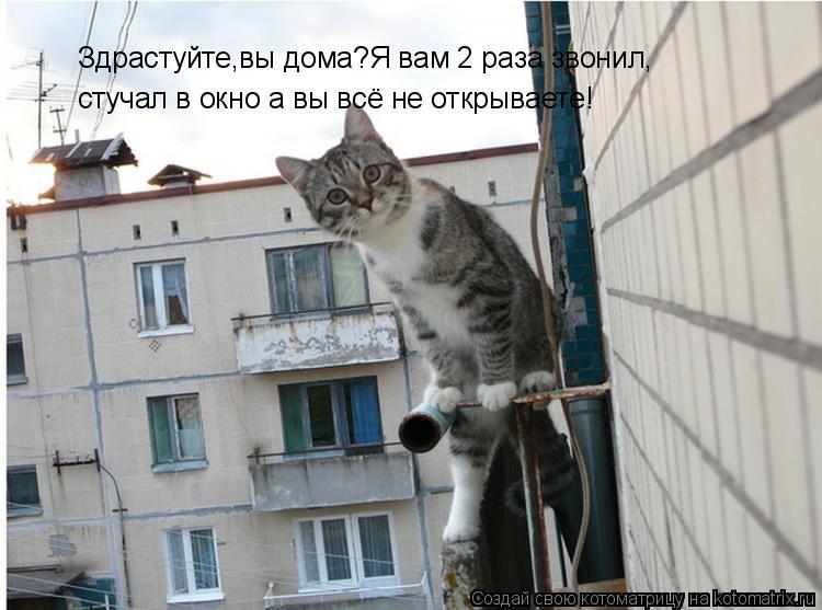 Котоматрица: Здрастуйте,вы дома?Я вам 2 раза звонил, стучал в окно а вы всё не открываете!