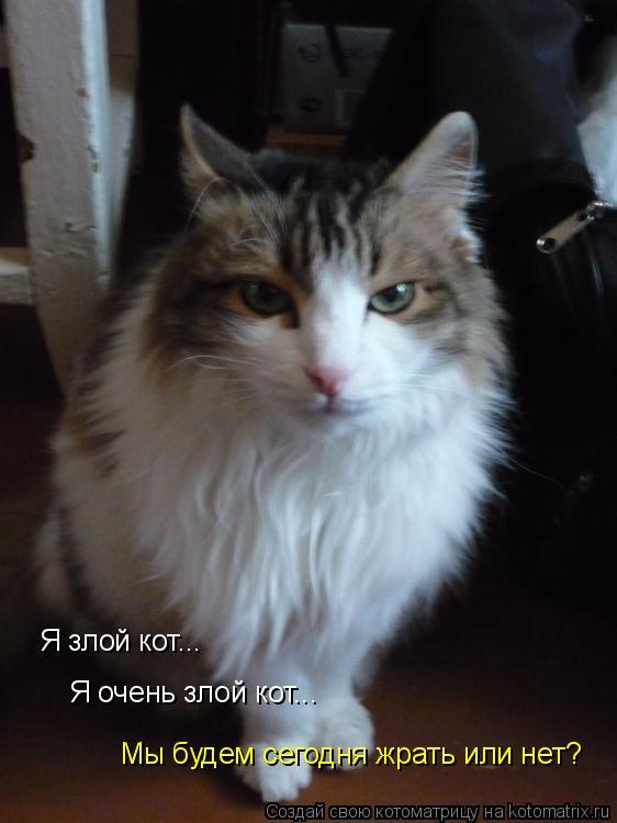 Котоматрица: Я злой кот... Я очень злой кот... Мы будем сегодня жрать или нет?