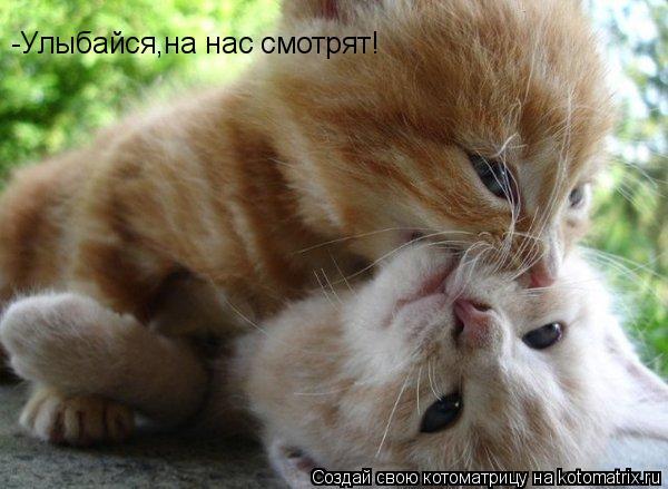Котоматрица: -Улыбайся,на нас смотрят!